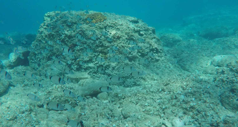 Caretta Diving Bumbiste 1500 800