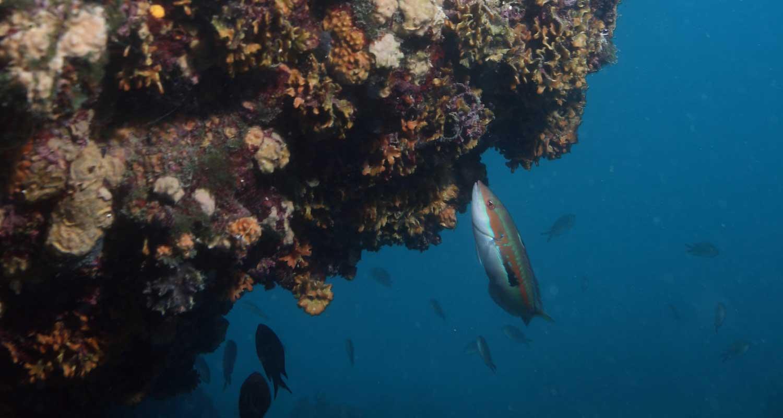 Caretta Diving Kanjon 1500 800